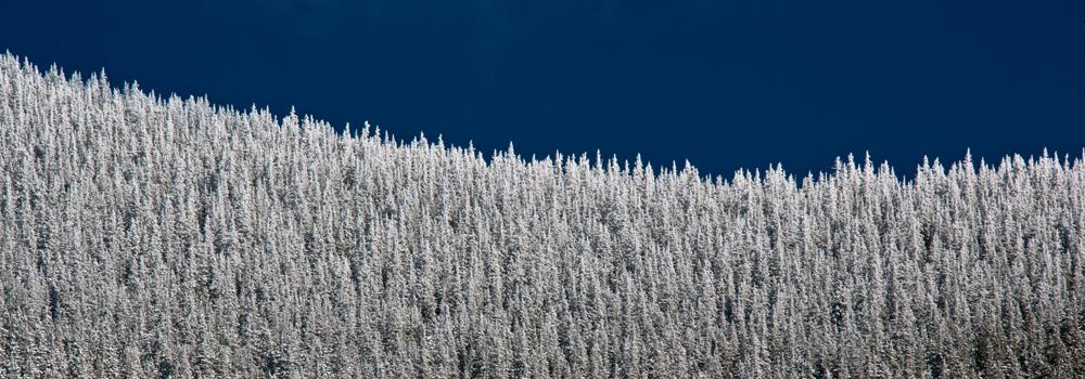 First Snow Fall, Santa Fe, New Mexico