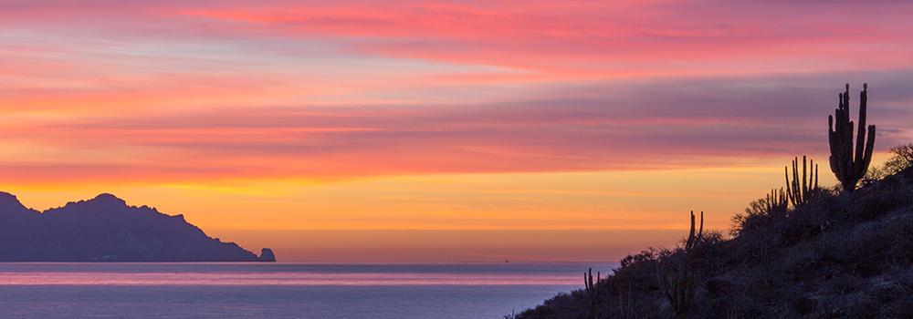 Cactus Sunrise, Sea of Cortez Mexico