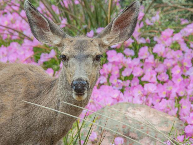 Naturalist Gardner Trimming New Growth