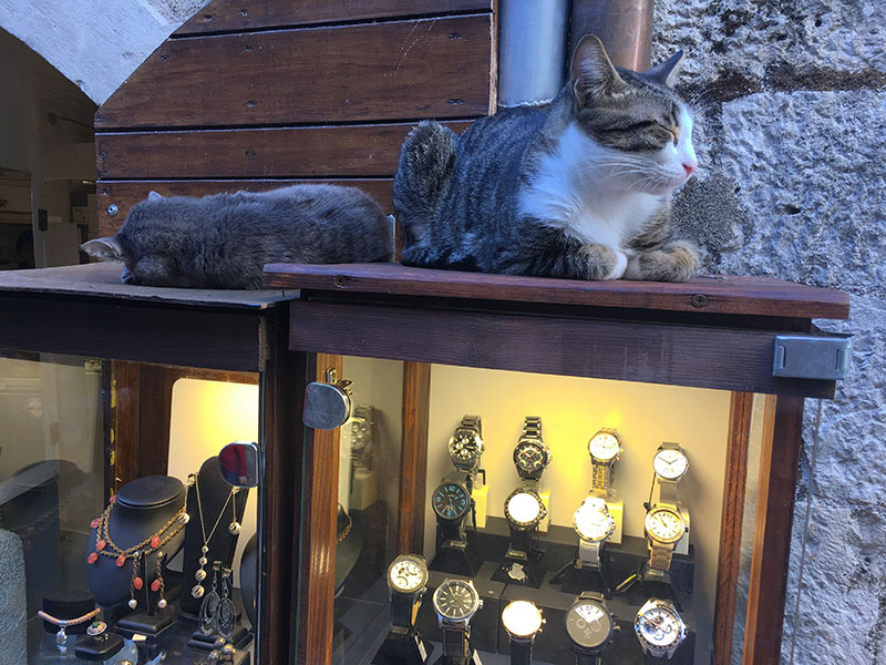 Sleepy cats of Kotor